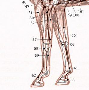 points sur l'antérieur